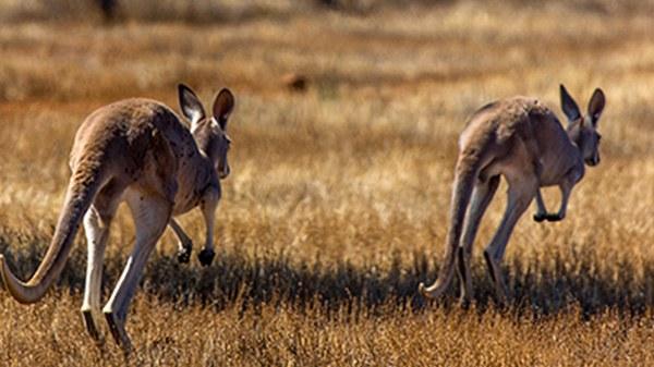 australisch-avontuur-nieuws